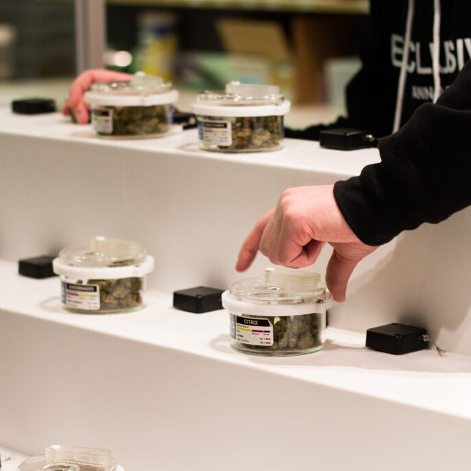 Exclusive Cannabis MI Dispaly