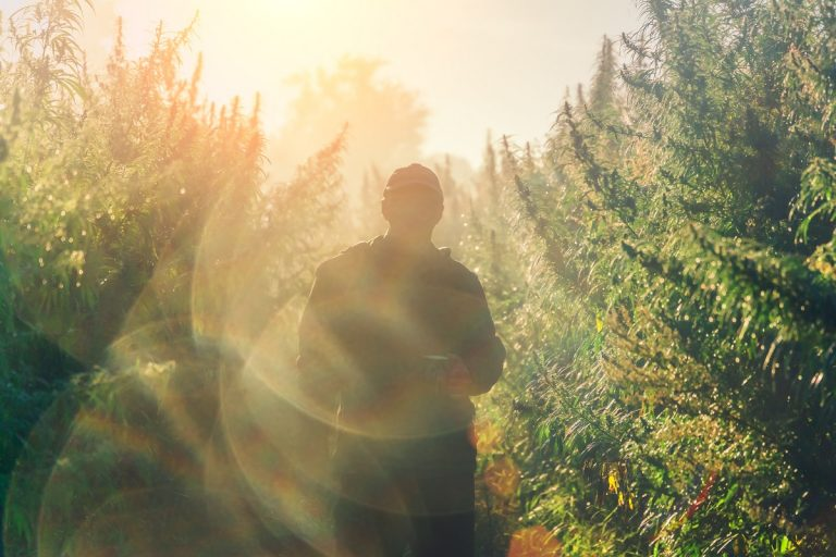 cannabis grower outdoors
